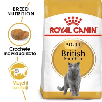 Royal Canin British Shorthair, 2 kg