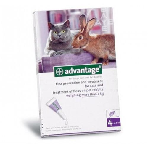 Advantage Pisica/Iepure 80 , 4 pipete